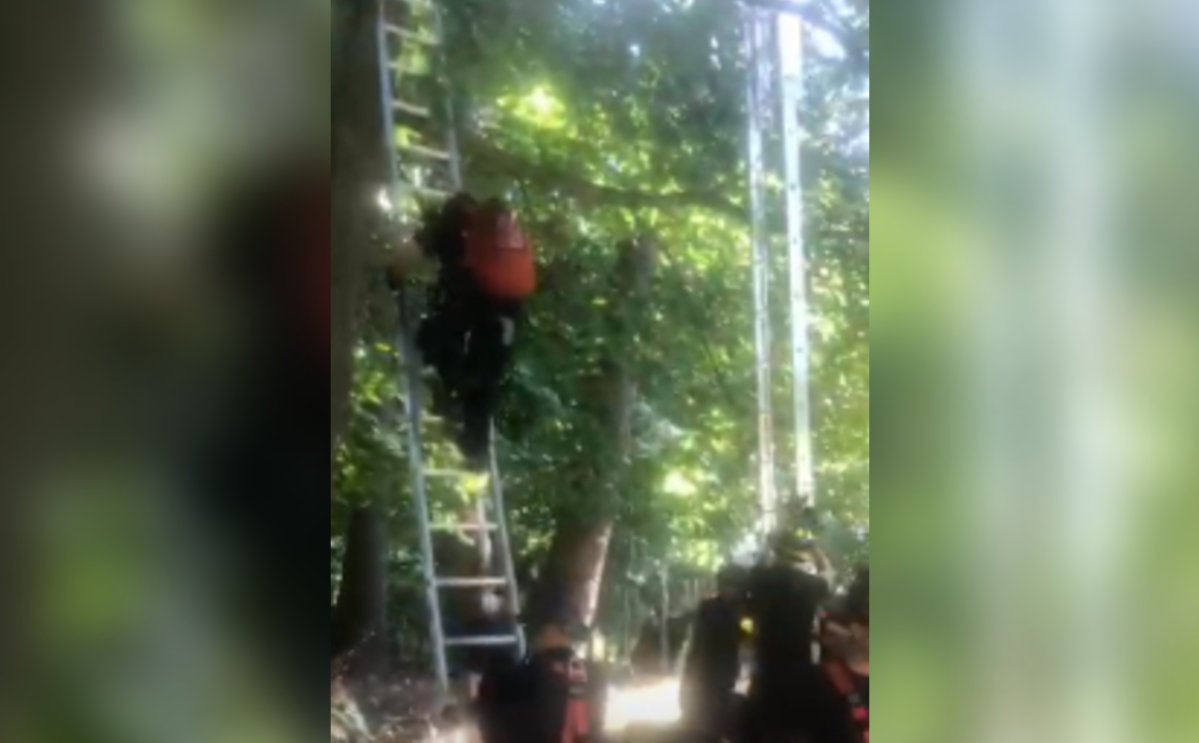 James Brennan got stuck in a tree while trying to save a neighbourhood cat.