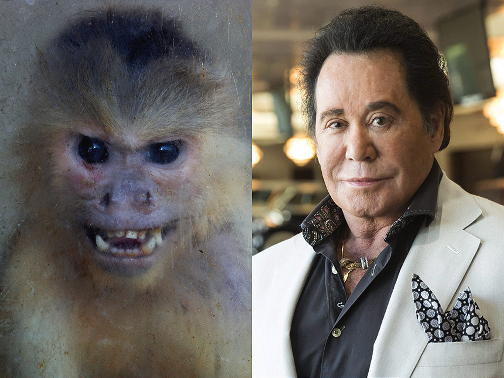 (L-R) A Capuchin monkey and Wayne Newton.