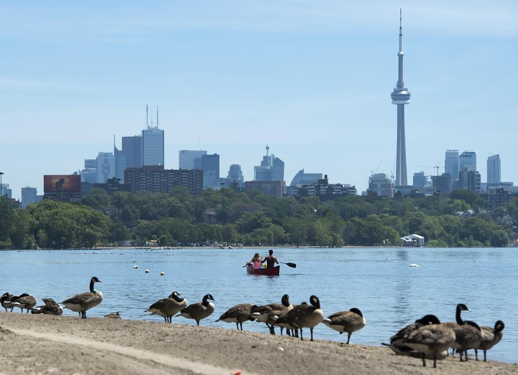 Canadian Geese watch on the beach as people paddle in a canoe on Lake Ontario in Toronto on Monday, July 15, 2019.