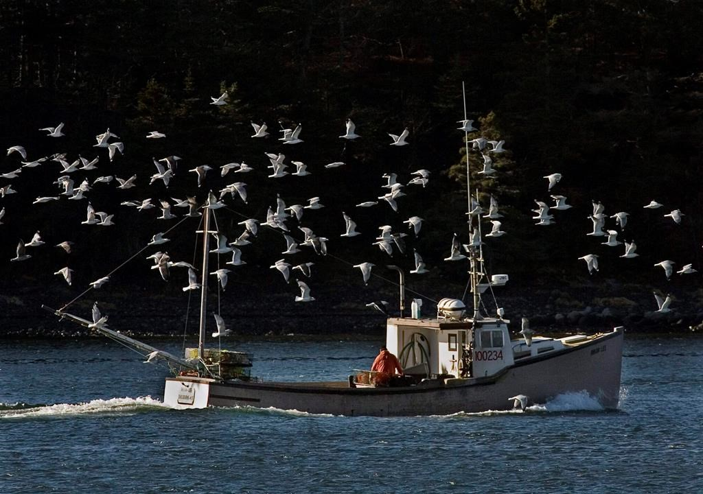 A lobster boat is escorted by a flock of sea gulls as it heads to port in Eastern Passage, N.S. on Monday, Dec. 29, 2008.