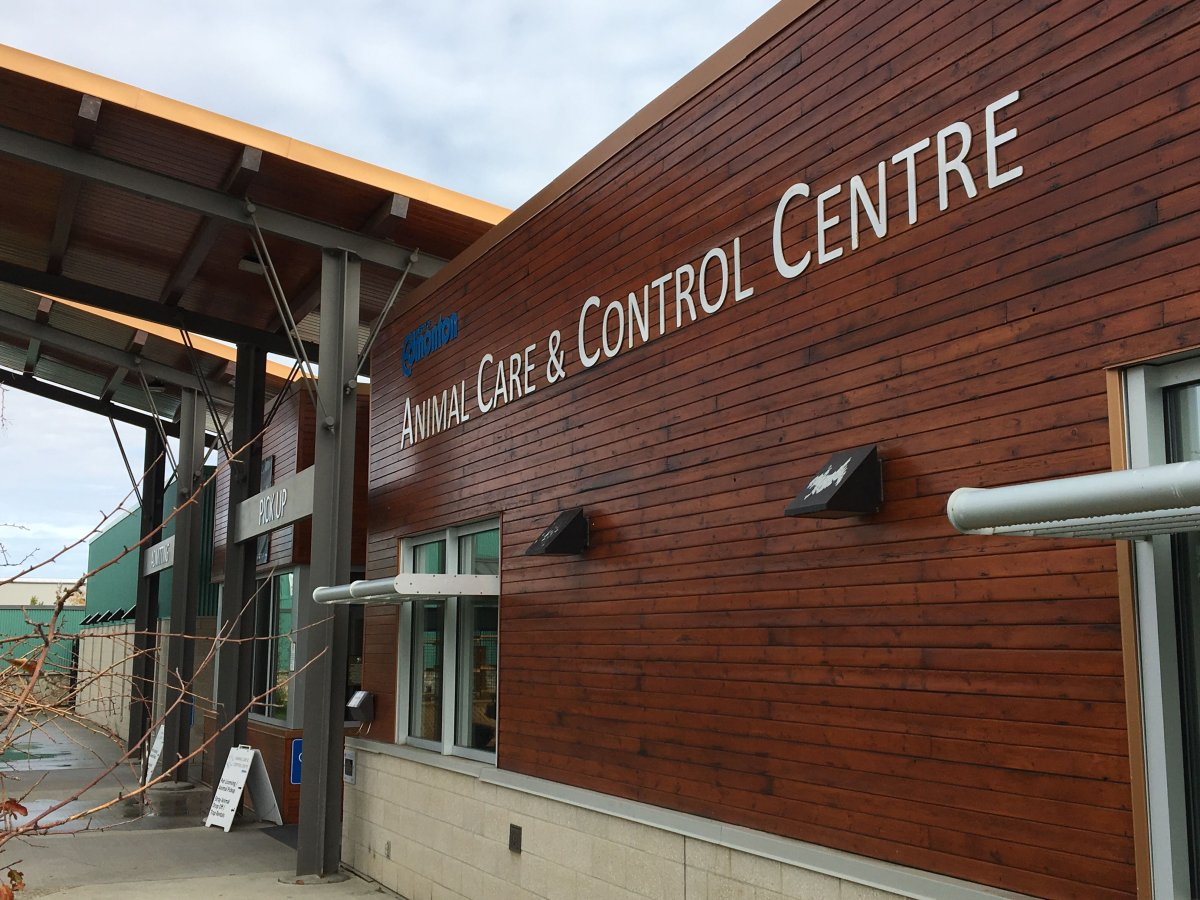 Edmonton's Animal Care and Control facility on Sept. 17, 2019.