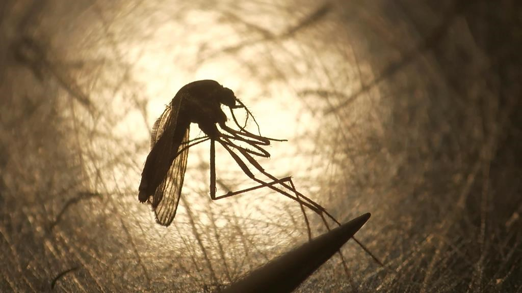 The Middlesex London Health Unit (MLHU) is warning residents to be mindful of bug bites after mosquitos in Sifton Bog tested positive for West Nile Virus.