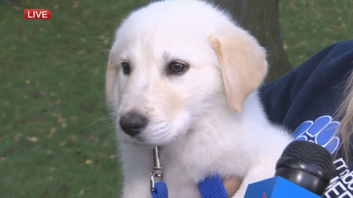 Hansel spent some of the first day of fall in Kildonan Park for the latest edition of Adopt A Pal on Global News Morning.