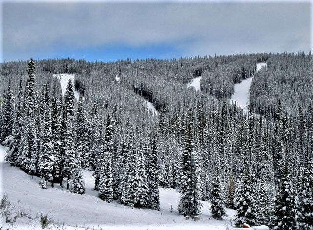Snowmobilers on Baldy Mountain near Oliver, B.C., a 'huge safety issue' - image