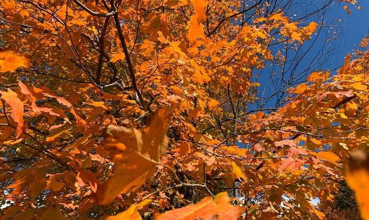 Fall weather is expected to be normal for Manitoba.