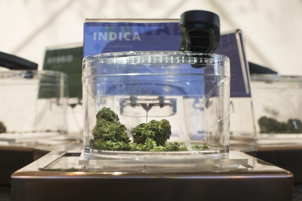 Cannabis is shown in a display jar on the first morning of opening for a Toronto retail store licensed to sell Cannabis in Ontario, on Monday, April 1, 2019. THE CANADIAN PRESS/Chris Young.