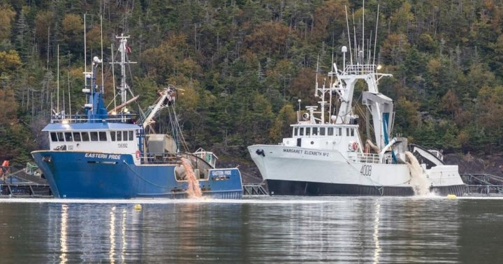 N.L. government urged to reassess aquaculture expansion after salmon die-off