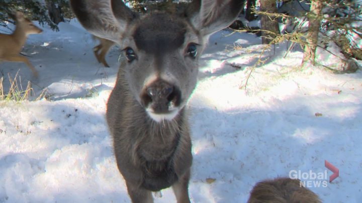 A file photo of a deer.