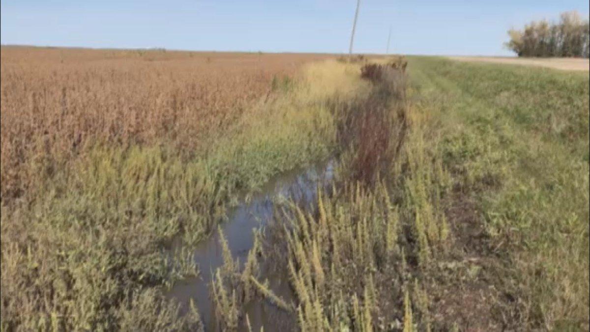 Farmers' field in Morris, Manitoba following record breaking rainfall numbers this season.