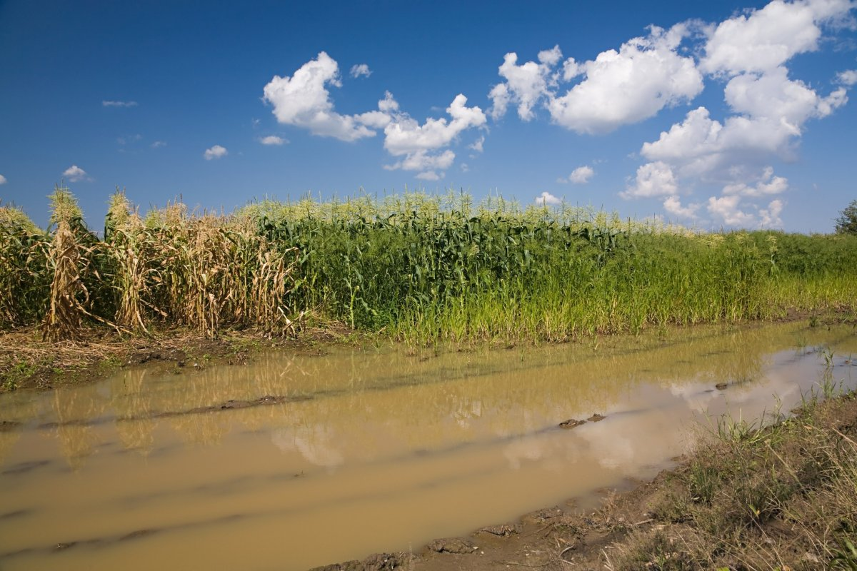 A flooded field.