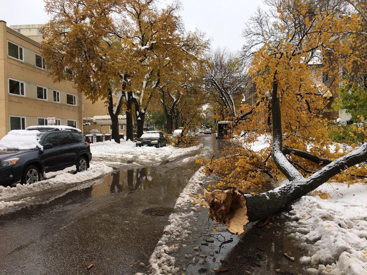 Trees down on Roslyn Road.