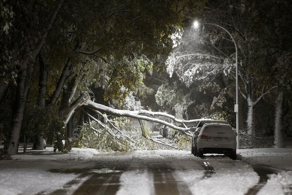 An early winter storm with heavy wet snow caused fallen trees, many on cars, and power lines in Winnipeg early Friday morning, October 11, 2019. Snow clearing crews were forced to hit the streets to clean up the damage. THE CANADIAN PRESS/John Woods.