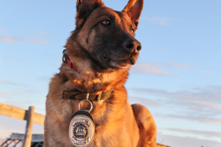 Sarka began her training with the Calgary Police Service in 2007.