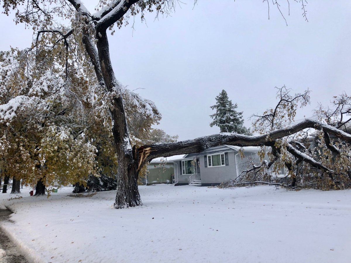 A tree branch fell on this house in Winnipeg Friday.
