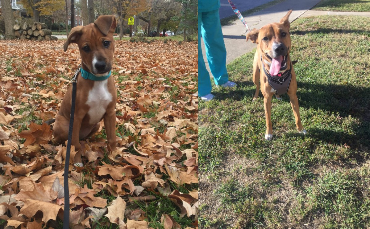 Kate Howard was shocked when the dog taking a nap on her lawn turned out to be her first-ever foster dog.