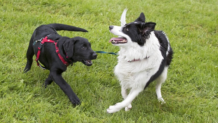 Regina city council is looking to approve funding for two new fenced-in, off-leash dog parks in Mount Pleasant and Harding Park.