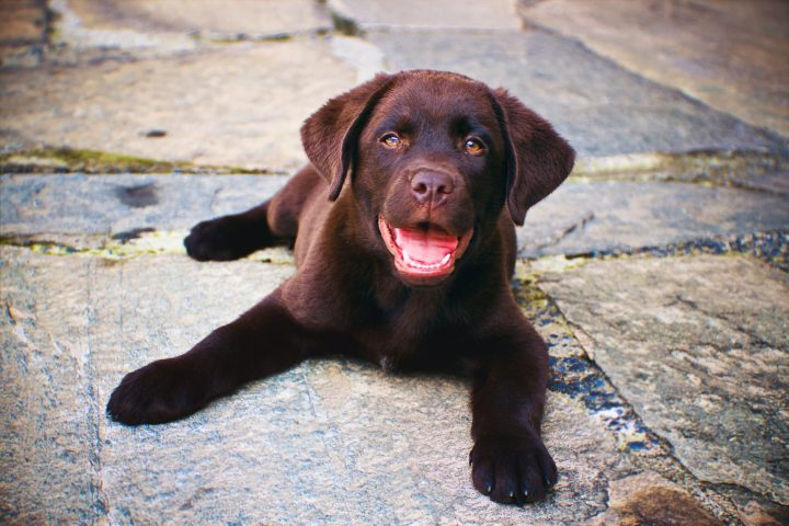 A puppy is shown in this file photo.