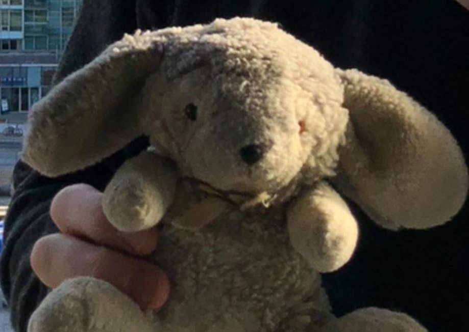 A toy bunny with a rich family history is still missing after being sucked out of a vintage warplane in the Hamilton area.