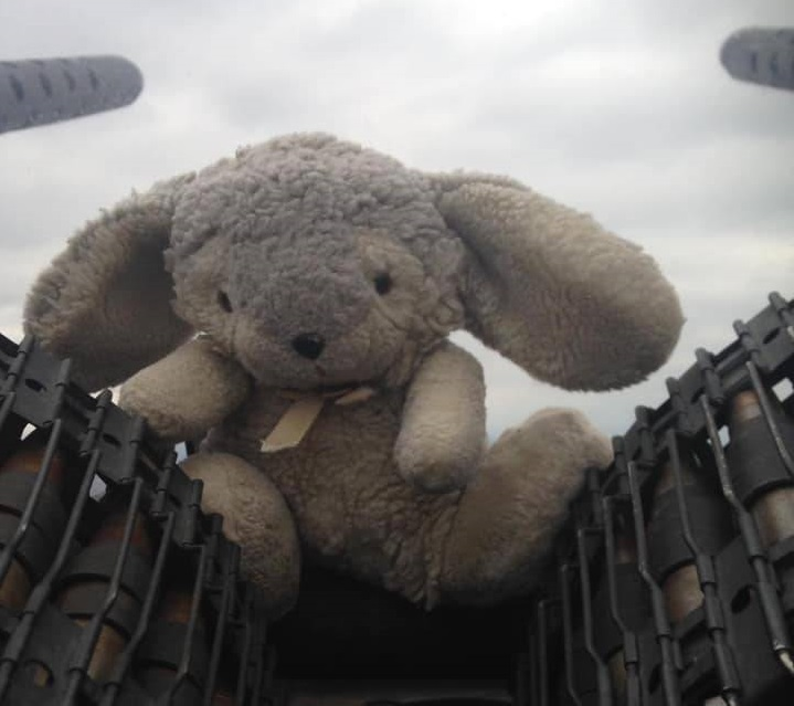 'Bunny' (seen sitting on the turret of a vintage Lancaster bomber) was found just over two after flying off a plane over Burlington, Ont.