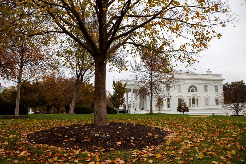 Fall foliage covers the North Lawn of the White House, Wednesday, Nov. 20, 2019, in Washington.