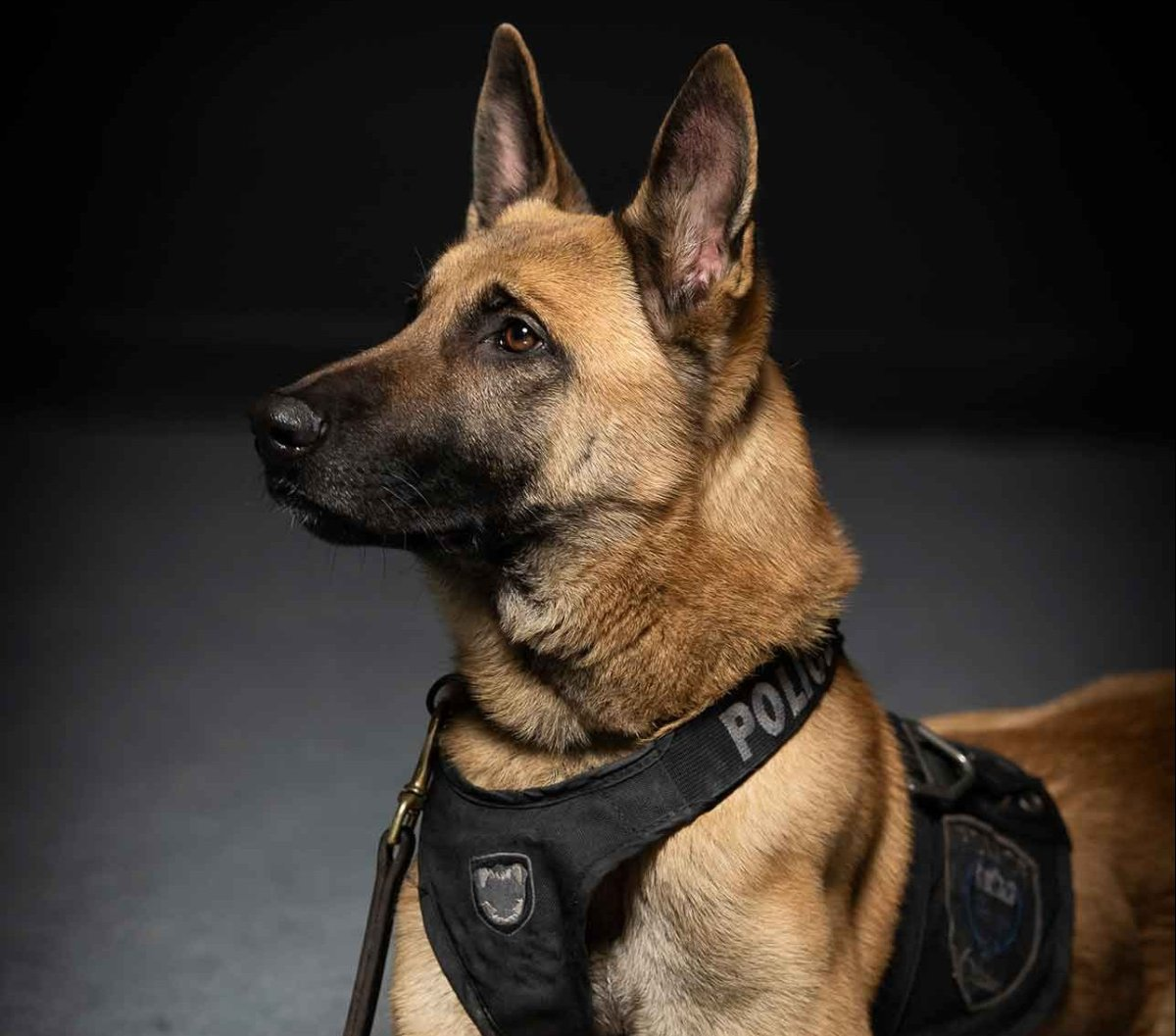 A handout photo from the Ottawa Police Service, captioned: K9 YRO.
