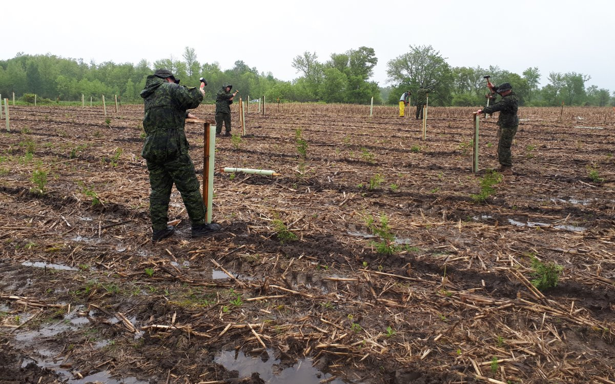 Members of the Hastings and Prince Edward Regiment plant trees at Murray Marsh Natural Habitat Area.