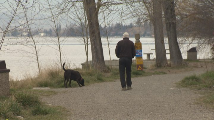 A man walks his dog at a local off-leash park in Kelowna.