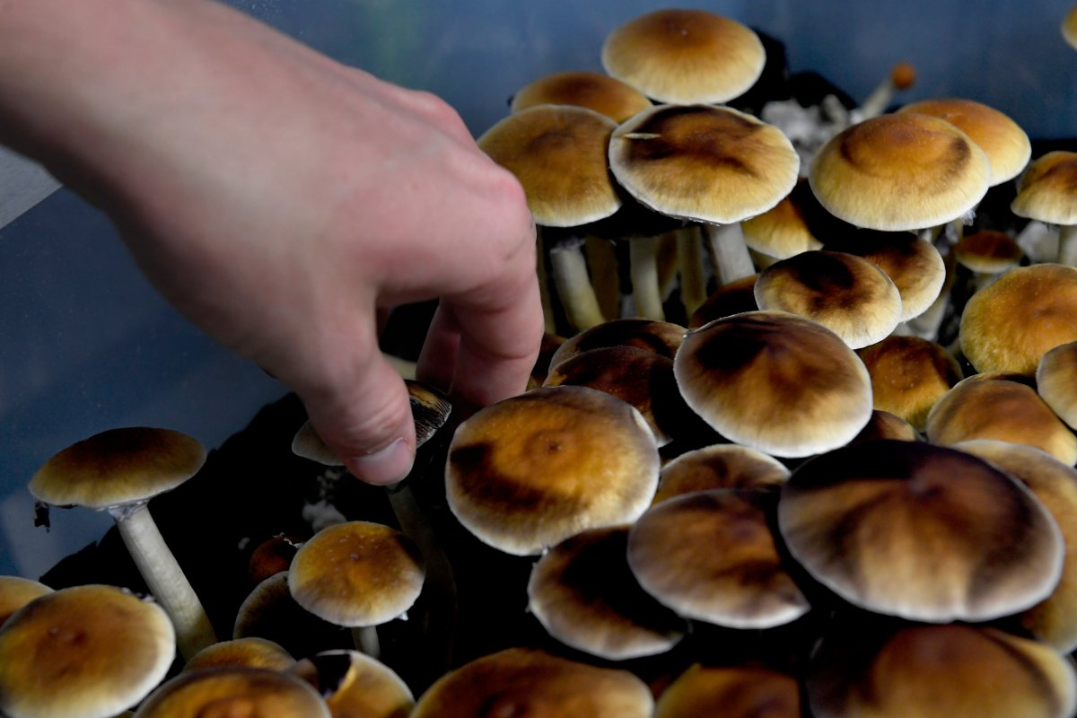 What the future holds for medical psychedelics in Canada - image