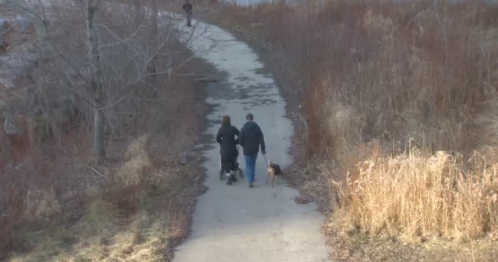 Police issue warning to dog owners after meat with pills seen in west Toronto