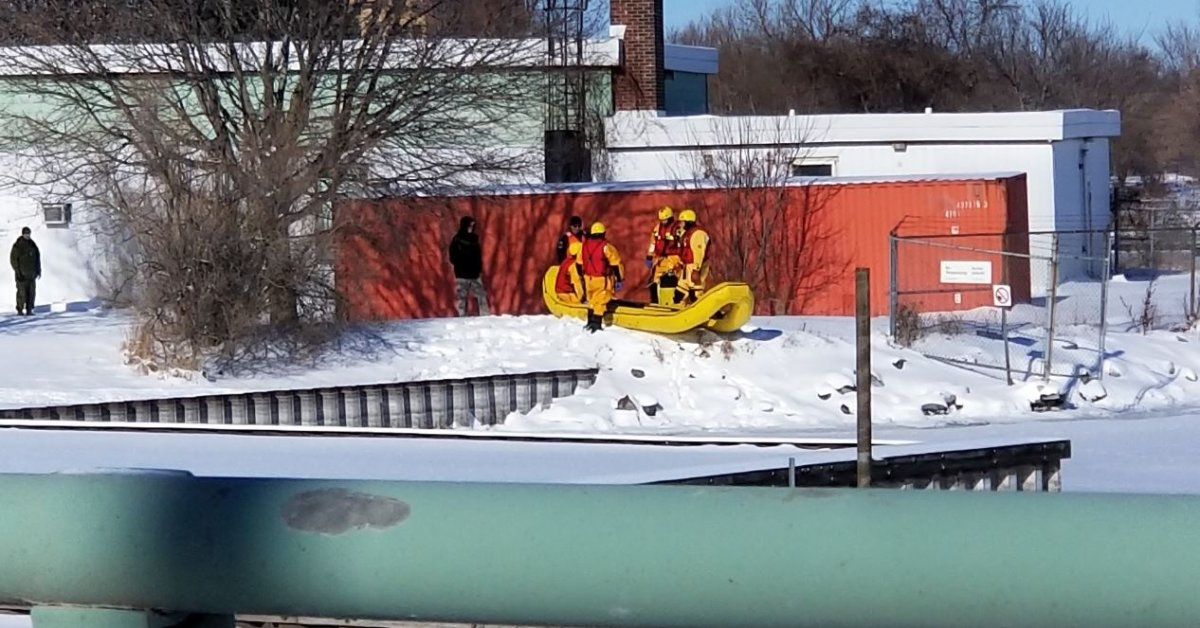 Kingston firefighters return to shore after going out to save a dog on the ice, only to learn it was a coyote.
