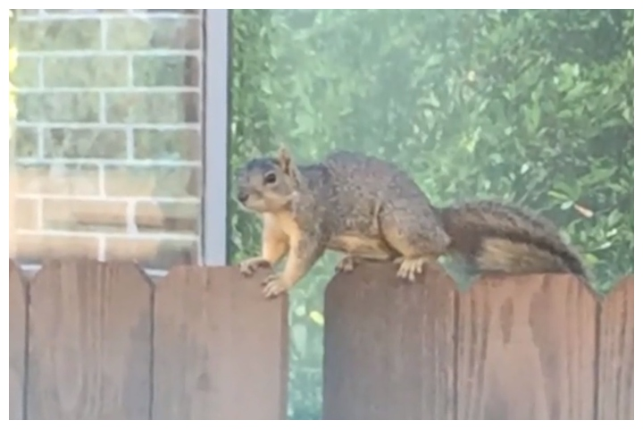 Residents in Cypress, Texas say they're being terrorized by an aggressive squirrel.