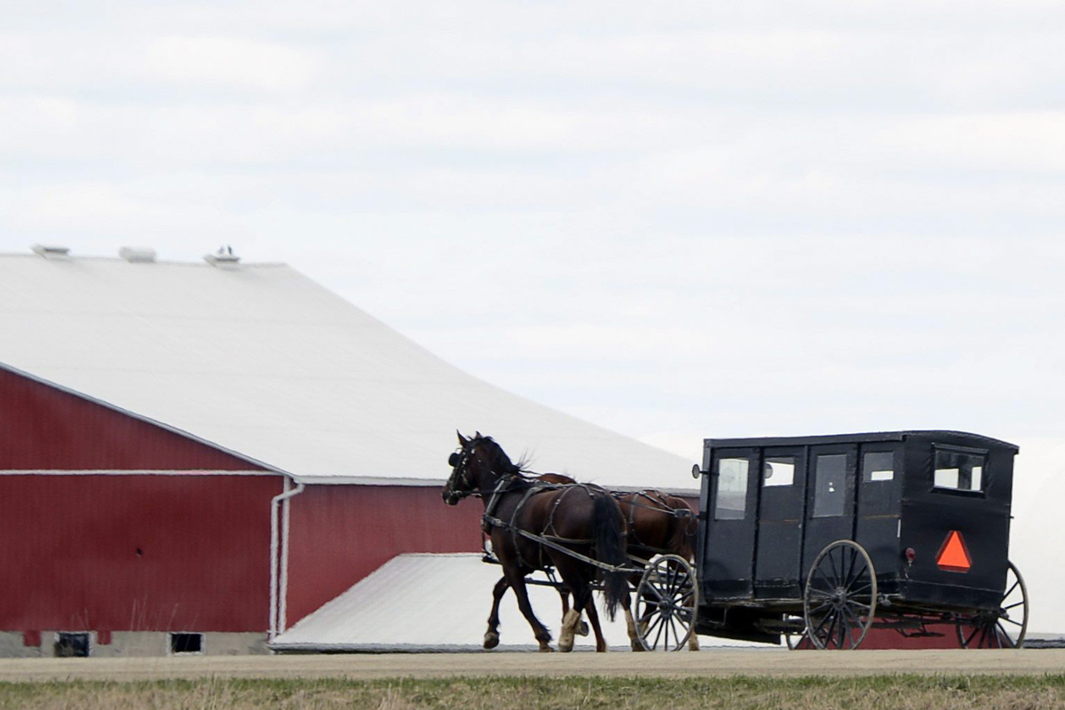 FILE PHOTO: A Mennonite horse and buggy on travels on the side of the road near St. Jacobs, Ont., just north of Waterloo on March 31, 2012.