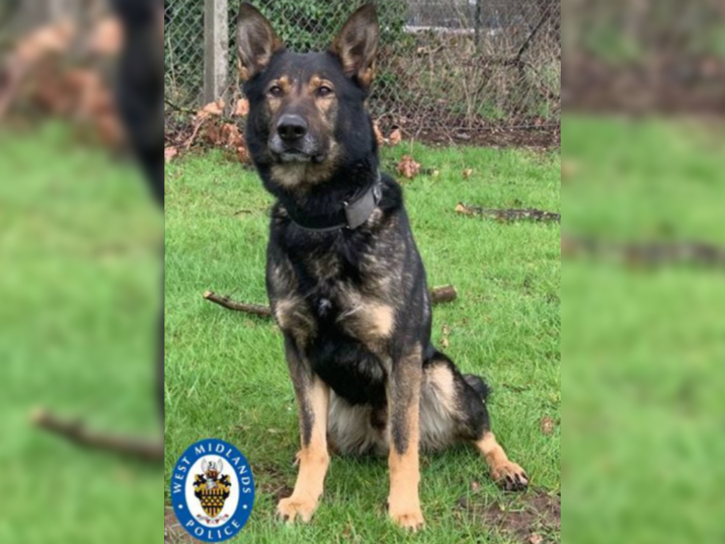 Police dog Odin's strong sniffer came in handy after a man tossed out his wedding ring.