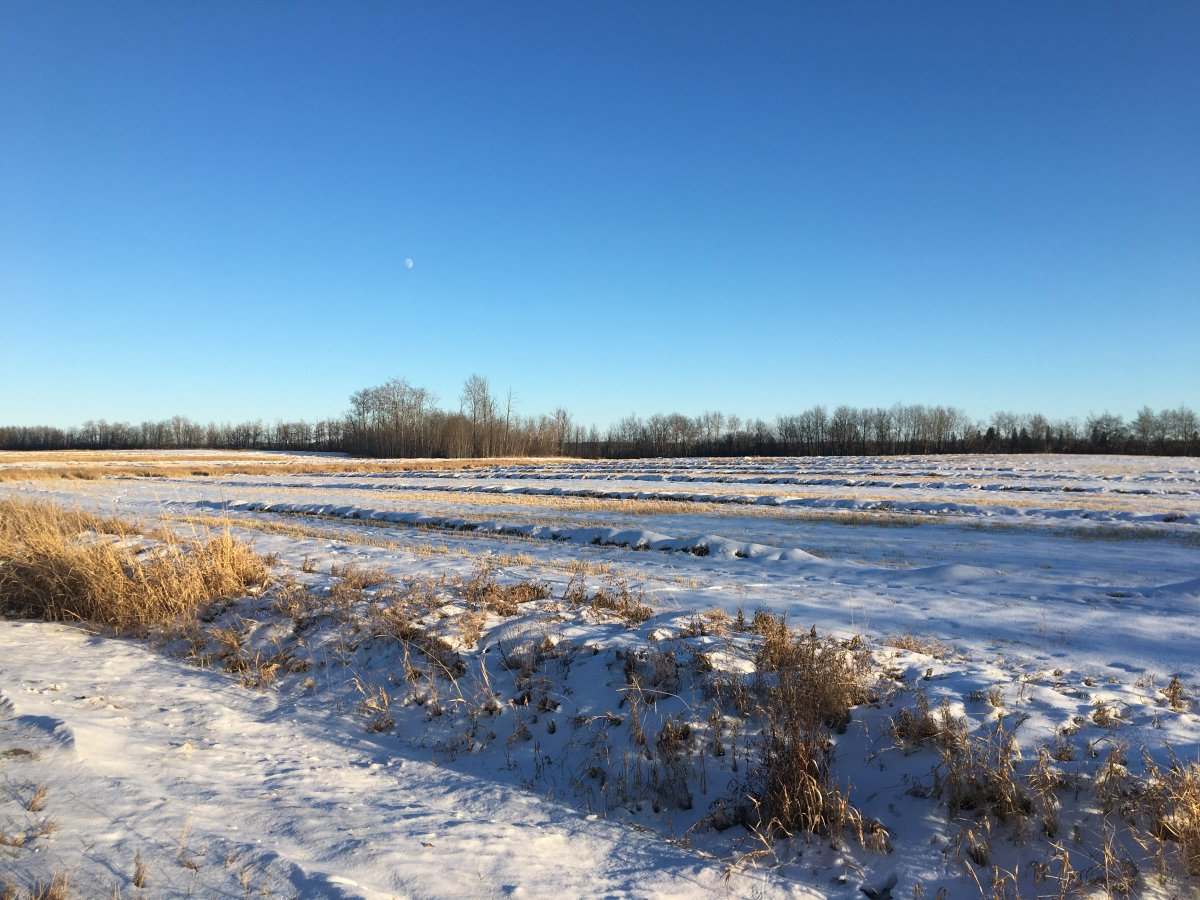 RCMP are investigating after human remains were located in a field east of Redwater, Alta., on Jan. 4, 2019.