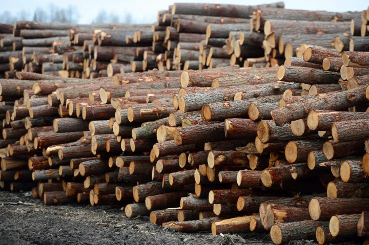 Logs are stacked at Murray Brothers Lumber Company woodlot in Madawaska, Ontario on Tuesday April 25, 2017.