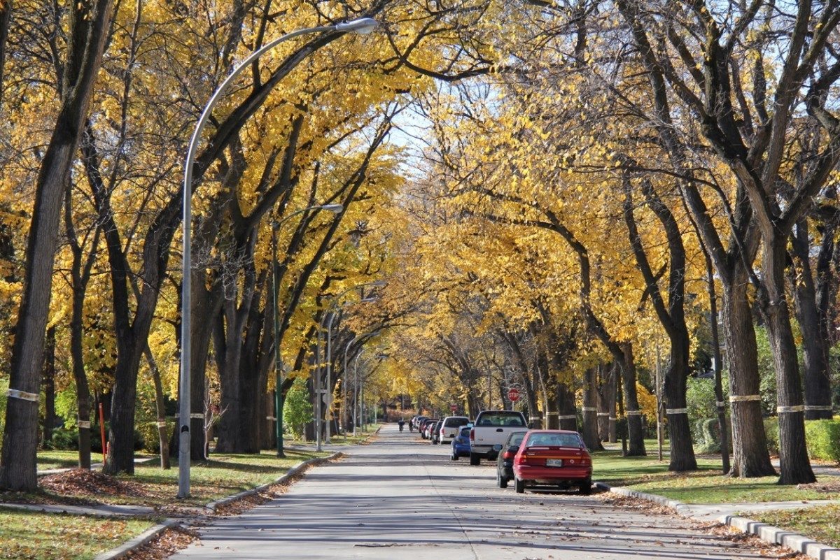 Adding one million trees to Winnipeg's canopy over the next 20 years will cost $43 million, according to a new report from the city.