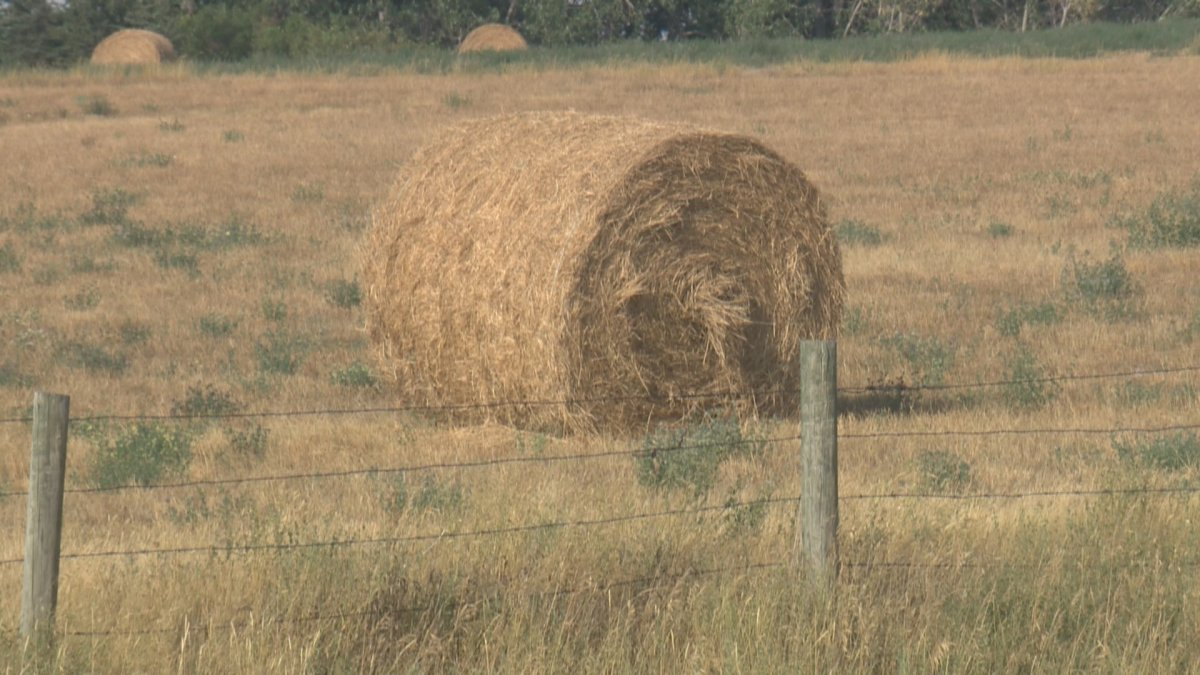 Saskatchewan Agriculture said moisture levels dropped sharply in the past week and rain is needed to improve crop and pasture growth.
