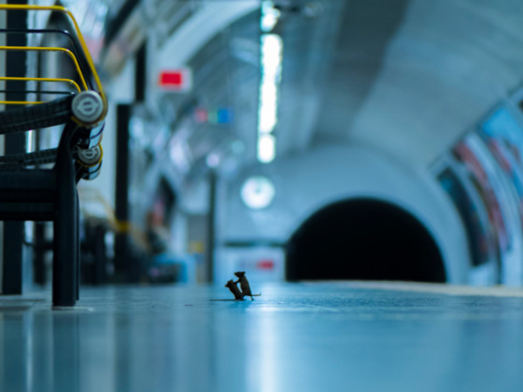 Photographer Sam Rowley's photograph 'Station Squabble' features two tiny mice fighting in a subway station. It won people's choice for Wildlife Photographer of the Year from London's Natural History Museum.