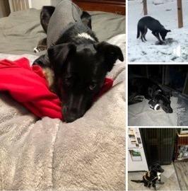 Mikki the dog was inside a car stolen Thursday night.