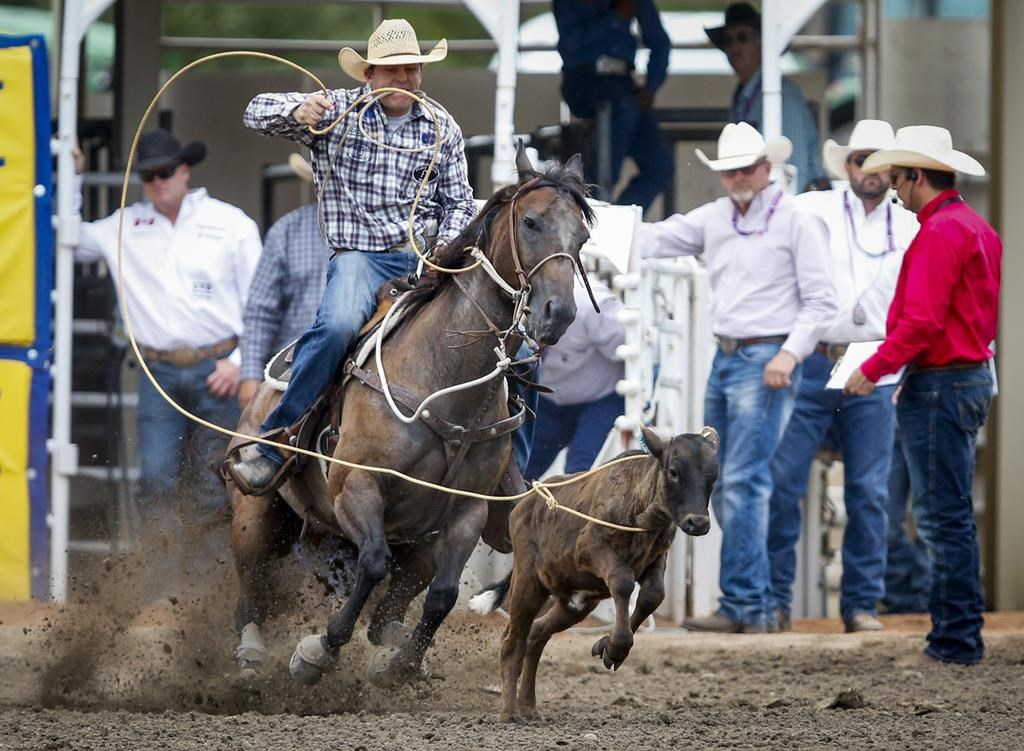 Caleb Smidt, of Bellville, Texas, ropes a calf during semi-final rodeo action at the Calgary Stampede in Calgary, Sunday, July 14, 2019.
