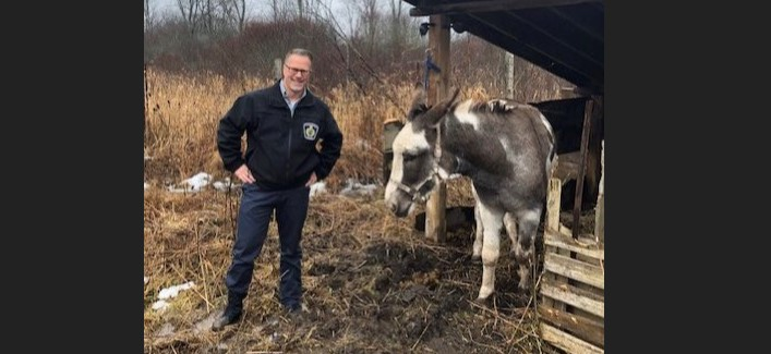 A woman has been arrested after Niagara Regional Police recovered a donkey that was allegedly stolen.