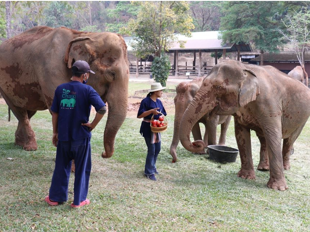 The Maesa Elephant Camp in Chiang Mai, Thailand announced their elephants would be put out of tourism work during the COVID-19 outbreak.