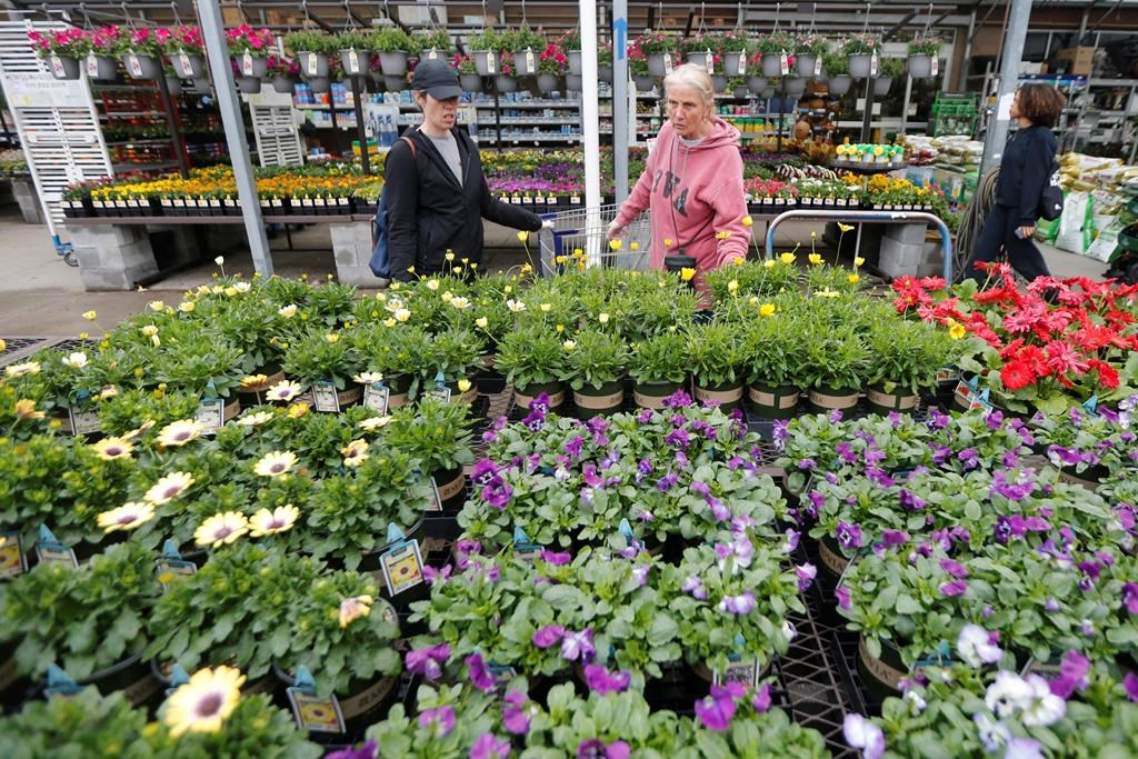 Gail Henrickson, right, and her daughter, Melissa, shop for plants at a local garden center as they stay at home during the coronavirus outbreak (AP Photo/Steve Helber).