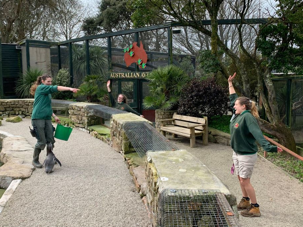 Four zookeepers of Cornwall's Paradise Park have moved in to the zoo to self-isolate during COVID-19 and keep the animals happy.