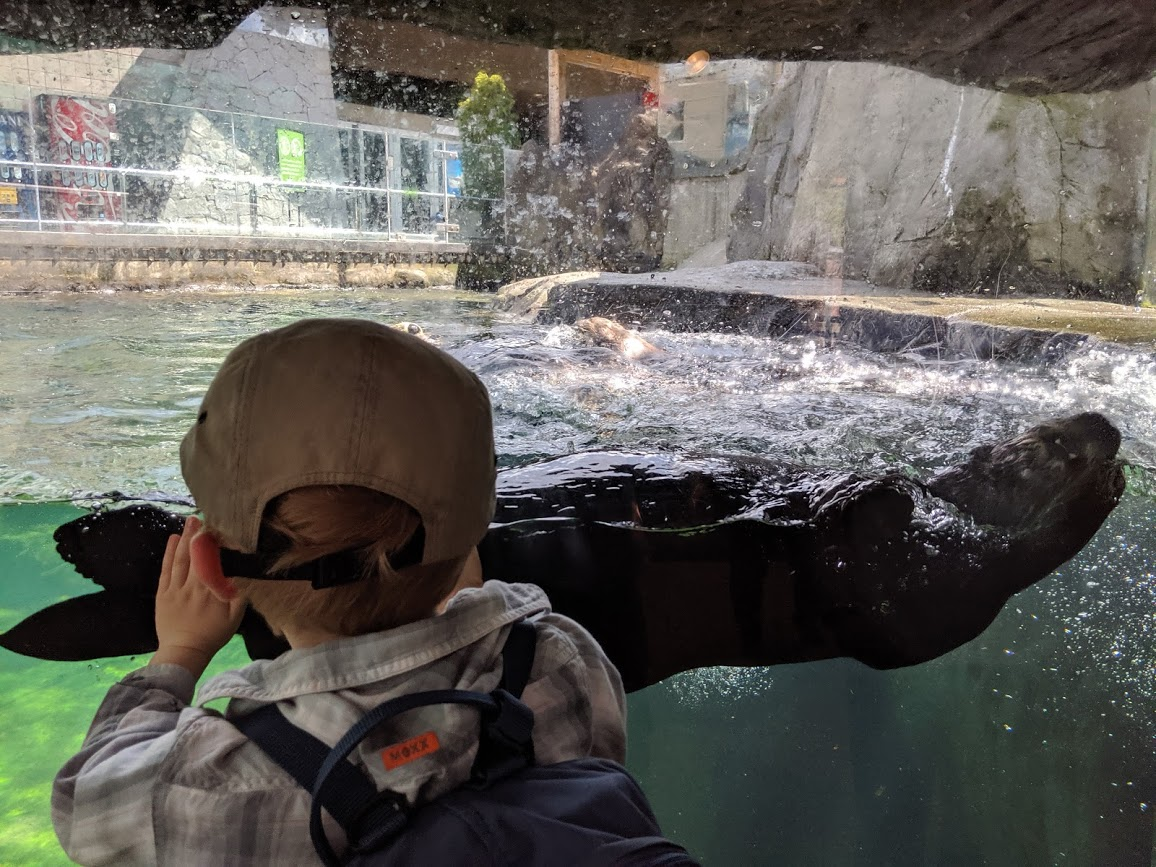 A child watches a sea otter at the Vancouver Aquarium.