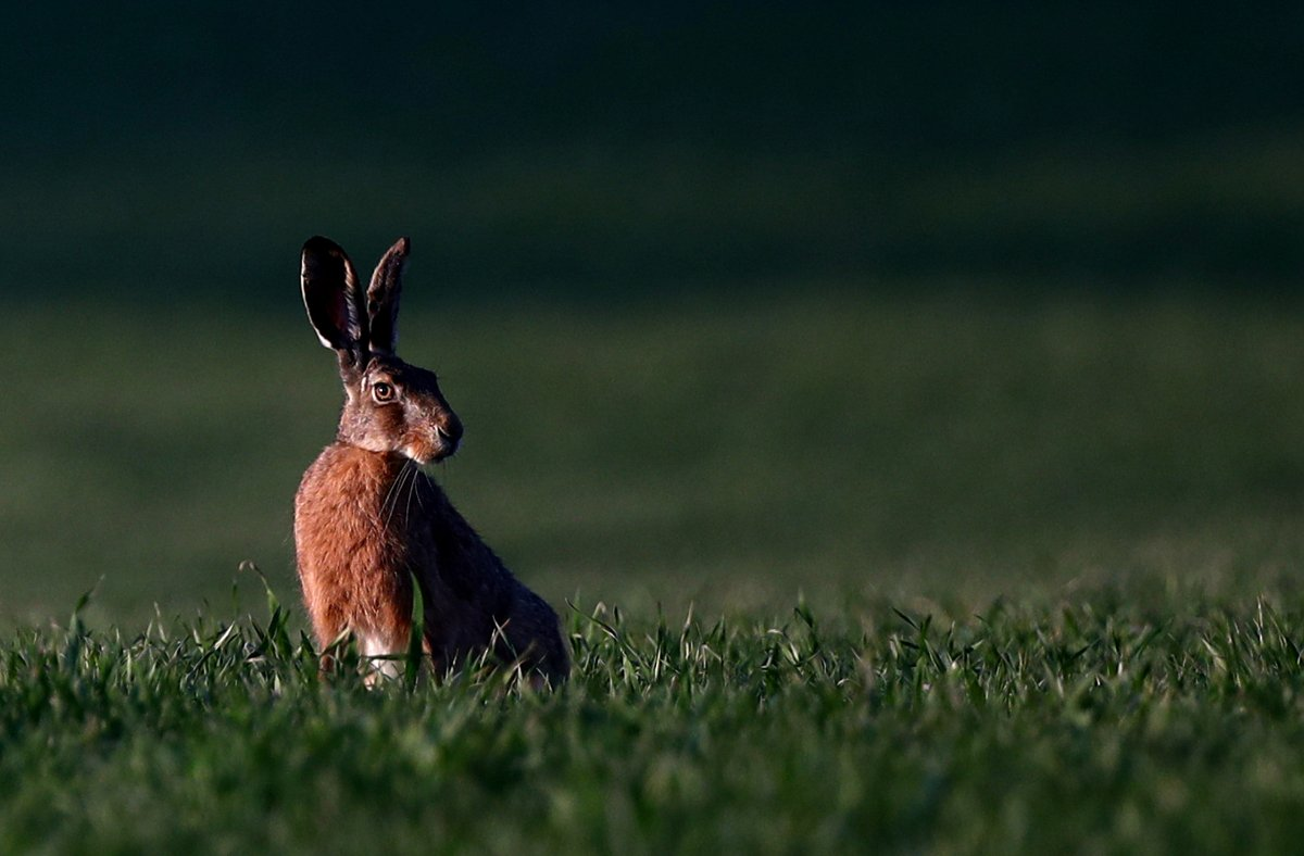 Another death, 14 new cases of COVID-19 in London-Middlesex as Easter Sunday approaches - image
