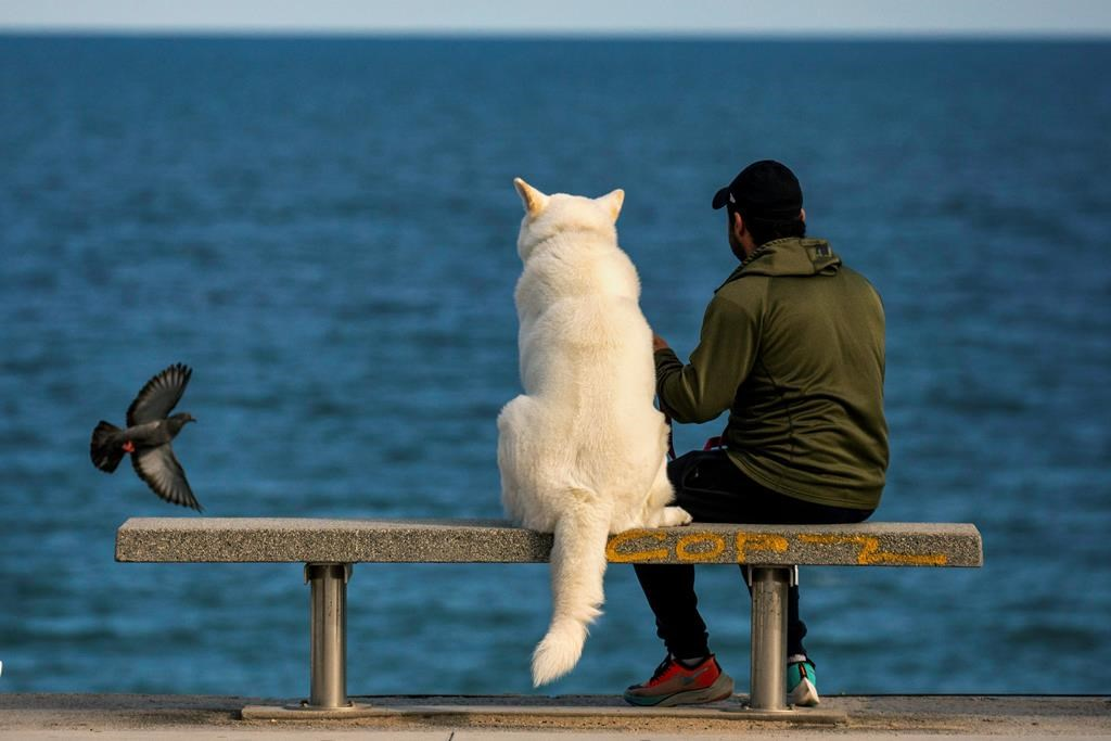 A man sits with his dog on a bench as they watch the Mediterranean sea in Barcelona, Spain, Sunday, April 26, 2020 as the lockdown to combat the spread of coronavirus continues. From Sunday, children under 14 years old will be allowed to take walks with a parent for up to one hour and within one kilometer from home, ending six weeks of compete seclusion.