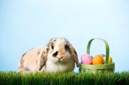 Continue reading: Coronavirus: Social distancing through Easter weekend in Saskatchewan