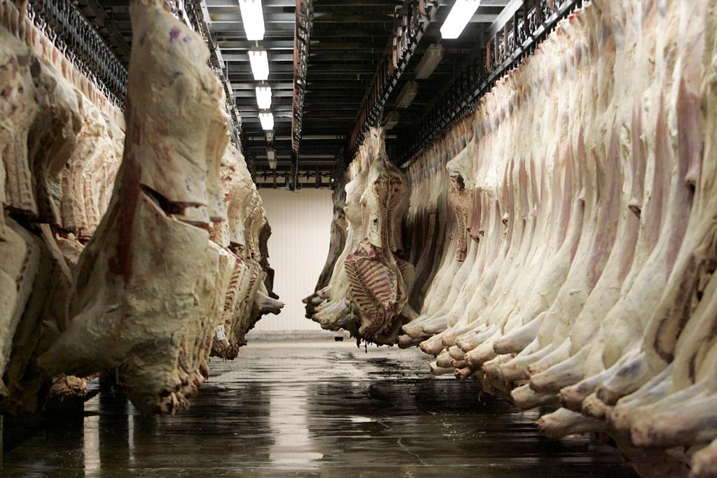 Meat packers call for changes to foreign worker cap to address labour shortage crisis - image
