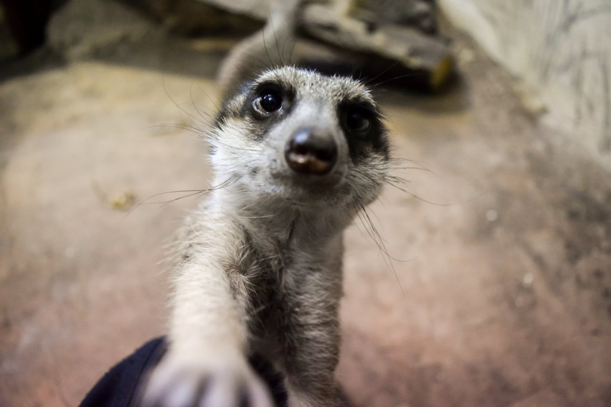 The Assiniboine Park Zoo is finding ways to introduce its animals to Winnipeggers despite social distancing.